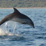 volunteer eco travel dolphin conservation