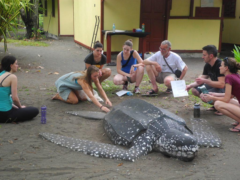 Resultado de imagen para Turtle Conservation costa rica