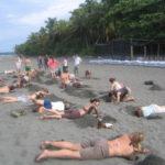 www.volunteereco.org-Sea turtle volunteer