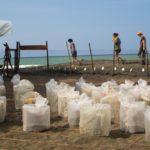 www.volunteereco.org-Sea turtle volunteer in Costa Rica-egg watch