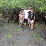 volunteereco.org volunteer for sea turtle conservation, mangroove