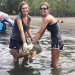 volunteereco.org volunteer for sea turtle conservation, release of a sea turtle