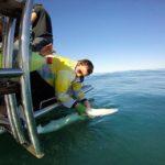 Volunteereco.org shark conservation volunteer; bio-metrics of the shark