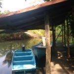 volunteereco.org volunteer for sea turtle conservation