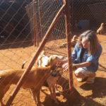 volunteereco.org volunteer for animal welfare, veterinary experience