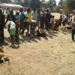 Volunteereco.org volunteer for animal welfare_dog vaccination