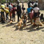 Volunteereco.org - volunteer for animal welfare and veterinary