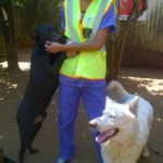volunteer animal welfare_taking care for the dogs