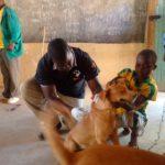 Volunteereco.org volunteer for animal welfare, veterinary experience.