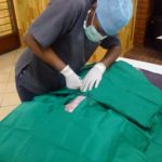 Volunteereco.org volunteer for animal welfare_veterinary opportunity in Africa.