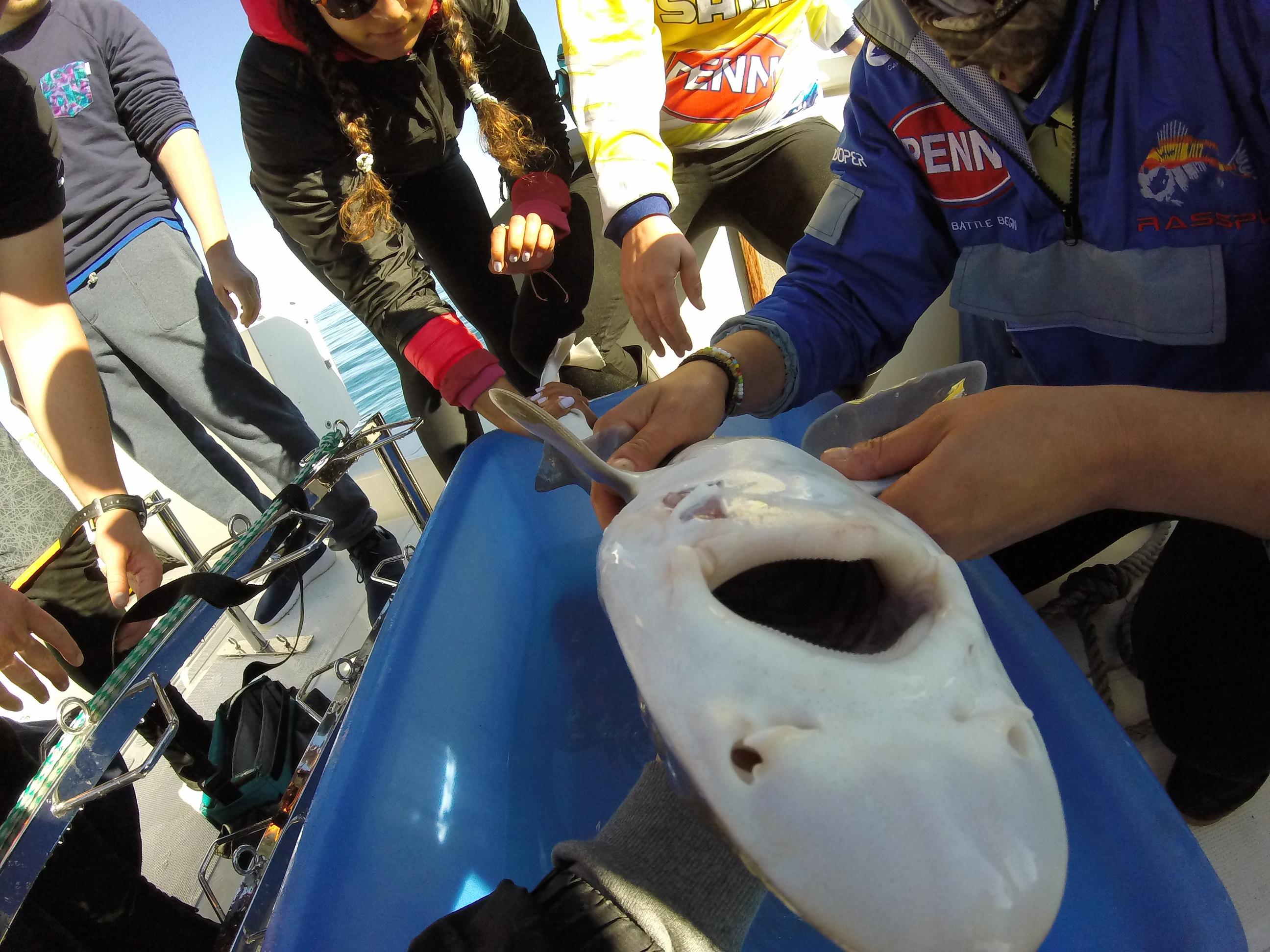 Volunteereco.org Volunteer for Sharks in South Africa