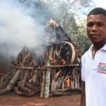 Ivory burning. In front a volunteer to rise the wildlife trade awareness..