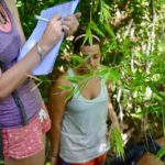 Volunteer for forest_writing the observational notes