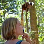 Volunteer for forest_observing monkeys