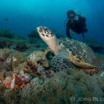 www.volunteereco.org Volunteer for Marine Mega fauna Indonesia sea turtle conservation