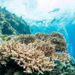www.volunteereco.org Volunteer-for-a-Great-Barrier-Reef_Snorkeling_beautiful reef