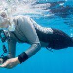 www.volunteereco.org Australia marine volunteer snorkeling survey slider