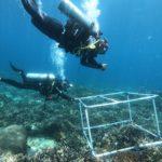 www.volunteereco.org Volunteer - dive for sharks, rays, turtles Sulawesi_volunteer divers