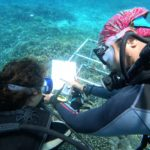www.volunteereco.org Volunteer - dive for sharks, rays, turtles Sulawesi-underwater data collection