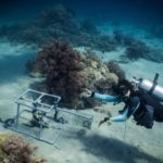 Volunteer - dive for sharks, rays, turtles Sulawesi