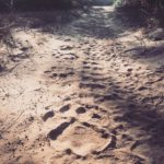 www.volunteereco.org volunteer-for-big-five-conservation_ Lion Footprint